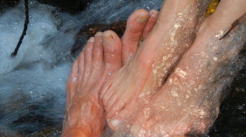 Ладни стапала