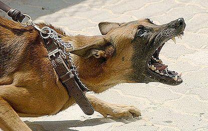 Борба на кучиња